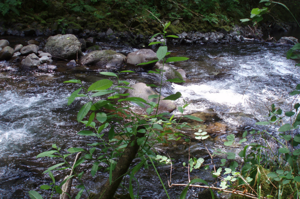 Many spectacular sights, such as this pristine creek, are available to you near Lakeshore Inn and Suites.