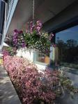 Comfortable gardens to relax in at Lakeshore Inn & Suites, Anchorage AK